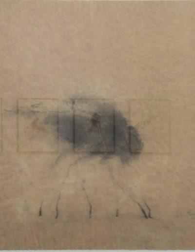la mouche du brouillard, 2006.
